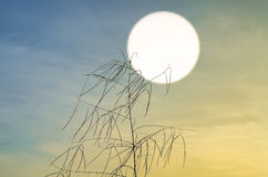 Grande erba con il cielo del sole su fondo Fotografia Stock