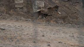 Grande escavatore industriale che dissotterra terra, sviluppo urbano Mestolo del bulldozer che funziona nel cantiere video d archivio