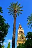Grande esterno della moschea della Spagna Cordova (3) Fotografie Stock Libere da Diritti