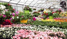 grande estufa com flores e as plantas bonitas para a venda em t imagem de stock