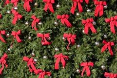Grande Evergreen con gli archi rossi immagine stock