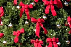 Grande Evergreen con gli archi rossi immagine stock libera da diritti
