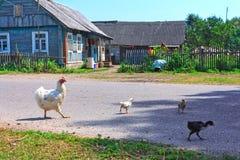 Grande famiglia del pollo Fotografie Stock Libere da Diritti