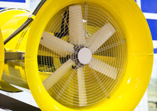 Grande fan Immagine Stock