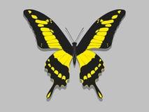 Grande farfalla con le ali nere, modelli gialli Fotografia Stock Libera da Diritti