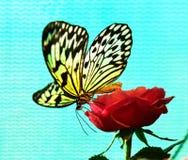 Grande farfalla della crisalide dell'albero (leuconoe di idea) Immagine Stock