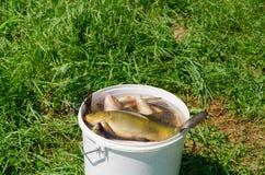 Grande fermo di pesca del pesce in acqua del secchio sul prato immagini stock libere da diritti