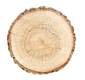 Grande fetta del tronco di albero tagliata dal legno Superficie strutturata con gli anelli e le crepe Fondo marrone neutrale fatt fotografia stock libera da diritti