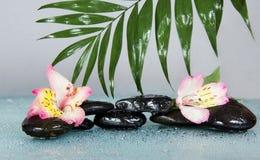 Grande feuille de howea au-dessus des pierres et des fleurs Image stock