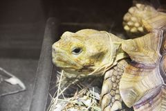 Grande fin de tortue photo libre de droits
