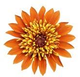 Grande fiore arancione e giallo Fotografia Stock Libera da Diritti