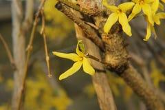 Grande fiore giallo! immagini stock