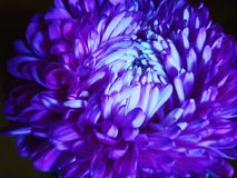 Grande fleur de fleur Image stock