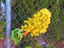 Grande fleur jaune Images stock
