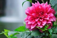 Grande fleur rouge Images stock