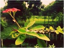 Grande flor foto de stock royalty free