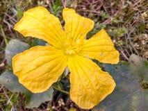 Grande flor amarela fotos de stock royalty free