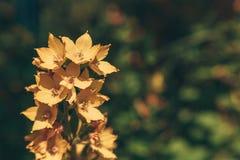 Grande flor amarela no taiga Imagem de Stock Royalty Free