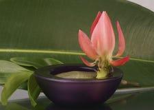 Grande flor tropical em um fundo das folhas verdes Foto de Stock Royalty Free