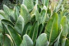 Grande foglia verde con le piccole gocce di pioggia fotografia stock