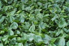 Grande folha, textura verde abstrata, fundo da natureza imagem de stock