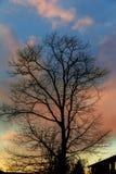 Grande fondo del cielo di tramonto della siluetta dell'albero Fotografie Stock