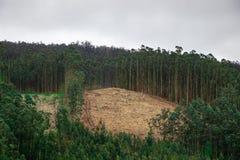 Grande for?t d?bois?e compl?tement de d?bris de coupure du bois Paysage ?cologique de crise de la Galicie, Espagne photos libres de droits
