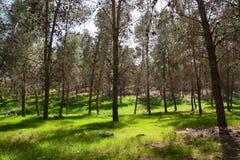 Grande foresta Fotografie Stock