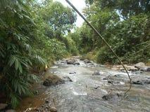 Grande foresta di bambù dell'inondazione del fiume e, Indonesia immagine stock
