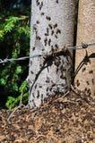 Grande fourmilière avec la colonie des fourmis dans la forêt d'été Image stock
