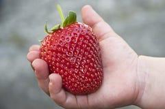Grande fraise Images libres de droits