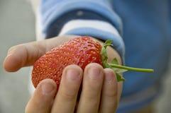 Grande fraise Photos stock