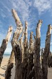 """Grande frangiflutti, 3000 tronchi per difendere la città dalle maree, flocculo de l """"spiaggia del ventail del ‰ di à in Saint Mal immagine stock"""