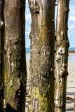"""Grande frangiflutti, 3000 tronchi per difendere la città dalle maree, flocculo de l """"spiaggia del ventail del ‰ di à in Sai fotografia stock"""