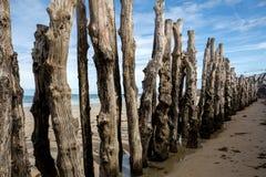 """Grande frangiflutti, 3000 tronchi per difendere la città dalle maree, flocculo de l """"spiaggia del ventail del ‰ di à in Sai immagini stock"""