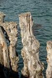 """Grande frangiflutti, 3000 tronchi per difendere la città dalle maree, flocculo de l """"spiaggia del ventail del ‰ di à in Saint Mal immagine stock libera da diritti"""