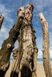 """Grande frangiflutti, 3000 tronchi per difendere la città dalle maree, flocculo de l """"spiaggia del ventail del ‰ di à in Saint Mal fotografia stock libera da diritti"""