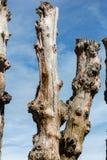 """Grande frangiflutti, 3000 tronchi per difendere la città dalle maree, flocculo de l """"spiaggia di Éventail in Saint Malo, Ille fotografie stock"""