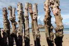 """Grande frangiflutti, 3000 tronchi per difendere la città dalle maree, flocculo de l """"spiaggia di Éventail in Saint Malo, Ille fotografie stock libere da diritti"""