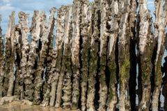 Grande frangiflutti, 3000 tronchi per difendere la città dalle maree, spiaggia di de l Eventail del flocculo in Saint Malo, immagine stock libera da diritti
