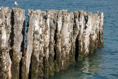 Grande frangiflutti, 3000 tronchi per difendere la citt? dalle maree, flocculo de l ?spiaggia del ventail del ? di ? in Saint Mal fotografia stock