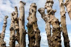 Grande frangiflutti, 3000 tronchi per difendere la citt? dalle maree, flocculo de l ?spiaggia del ventail del ? di ? in Saint Mal fotografie stock