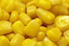 Grande fundo do milho da grão Foto de Stock Royalty Free