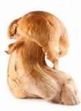 Grande fungo Fotografie Stock Libere da Diritti