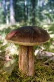 Grande fungo fotografia stock