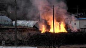 Grande fuoco aperto con le fiamme gialle stock footage