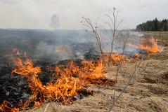 Grande fuoco nel campo di erba asciutta. fotografia stock libera da diritti