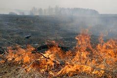 Grande fuoco nel campo di erba asciutta. fotografie stock libere da diritti