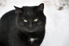 Grande gato preto bonito no inverno imagens de stock