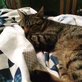 Grande gattino Fotografia Stock